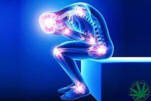 CBD proti bolesti a zánětům