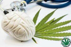 marihuana-a-imunitni-system