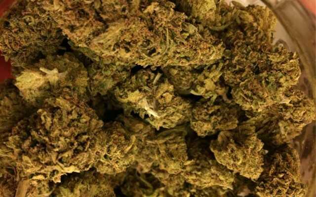 CBD-Z7 strain