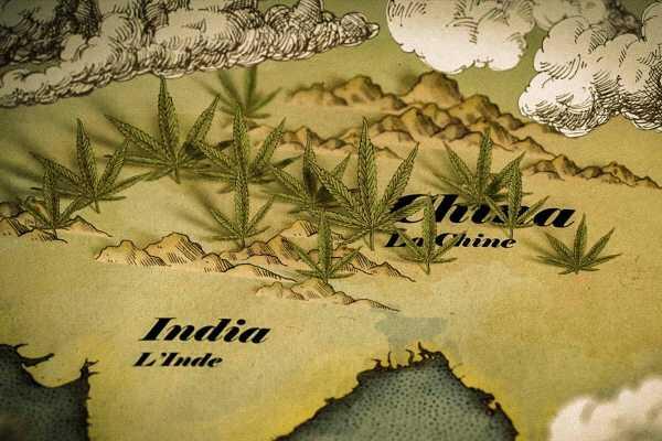 Historie-konopi-cannabis
