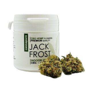 CBG-kvety-JACK-FROST-1